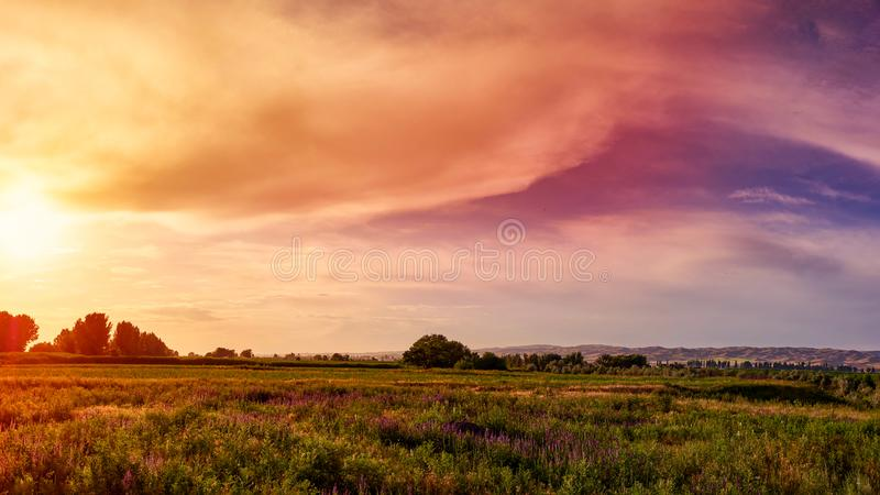 Sunset wild field with wildflowers and mountain range. Panorama. Fabulous sunset wild field with wildflowers, in the background a mountain range royalty free stock photos