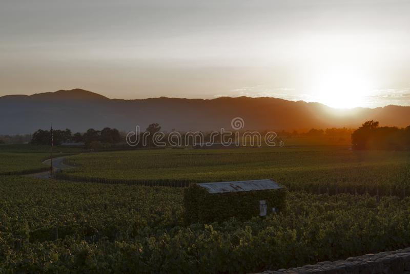 Napa Valley landscape at sunset, California, USA royalty free stock photo