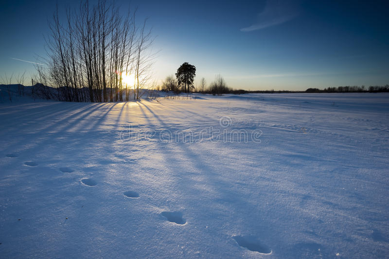 Sunset in winter. Animal tracks in the snow in the rays of the sun in winter stock photography