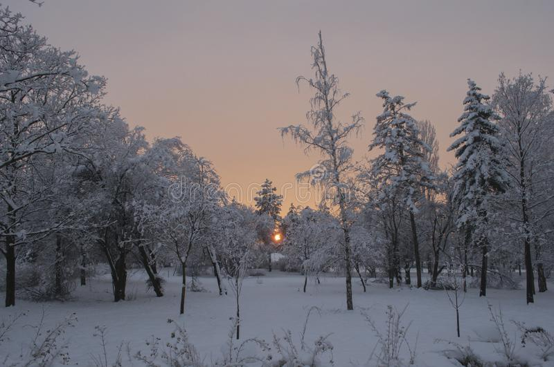 Sunset winter colors in a huge park with a trees covered with snow. And with a lot of snow all around.in southeastern europe winter coul lasts 3 or 4 months stock image