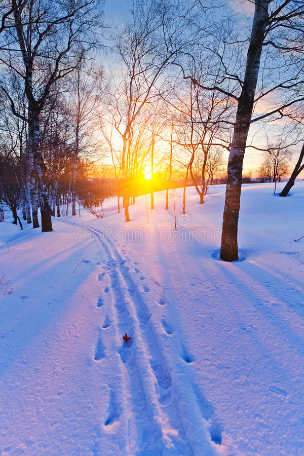 Download Sunset in winter forest stock image. Image of frozen - 27919987