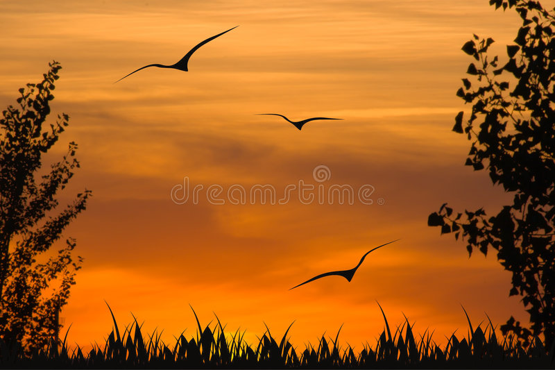 Sunset in wood royalty free stock photography