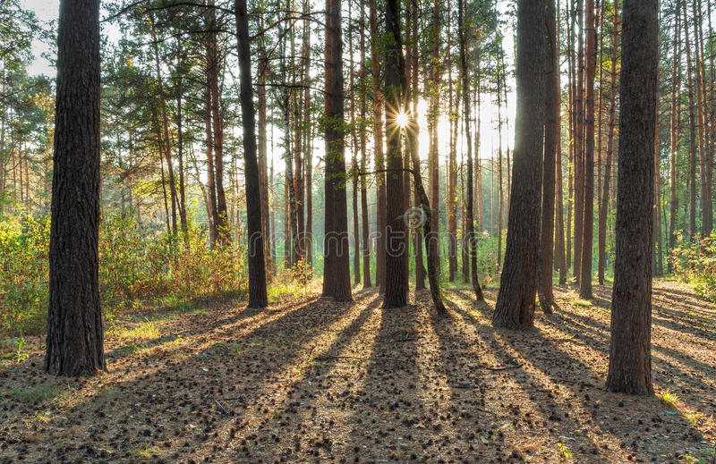 Sunset In The Woods Stock Photography