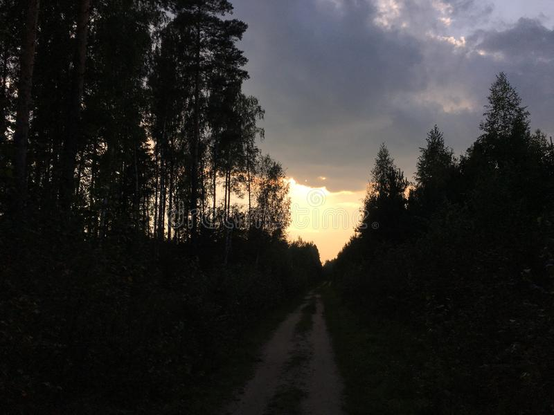 Sunset in Woods in Moscow Suburbs in Russia. Sunset in Woods in Moscow Suburbs, Russia royalty free stock image