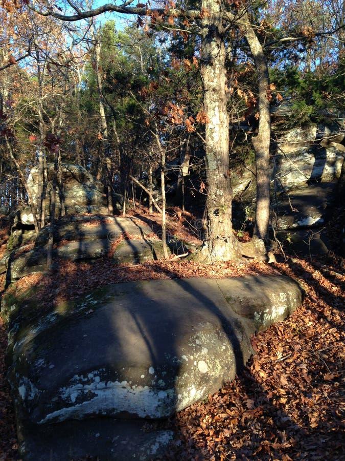 Sunset Woods and Rocks stock photos