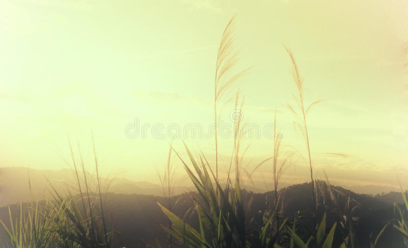 Sunset yellow sky wallpaper and background. Night time royalty free stock images