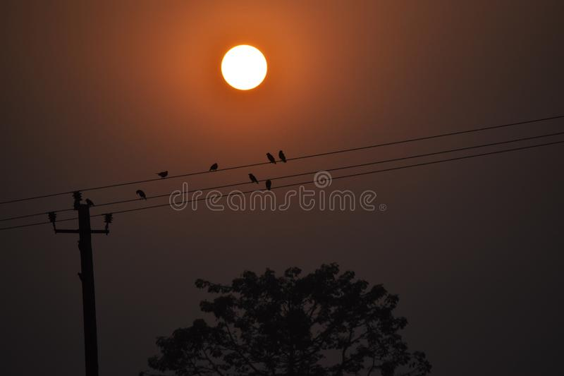 Sunset yellow some Bird flying under sunset. Sunset yellow sambad offline shyam bird flying under some royalty free stock image