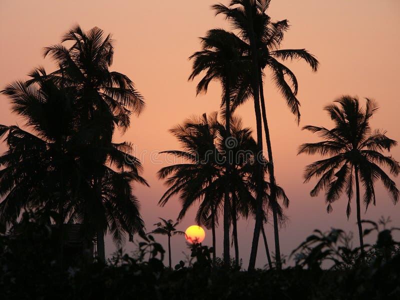Download Sunset1 fotografering för bildbyråer. Bild av pink, oklarhet - 522557