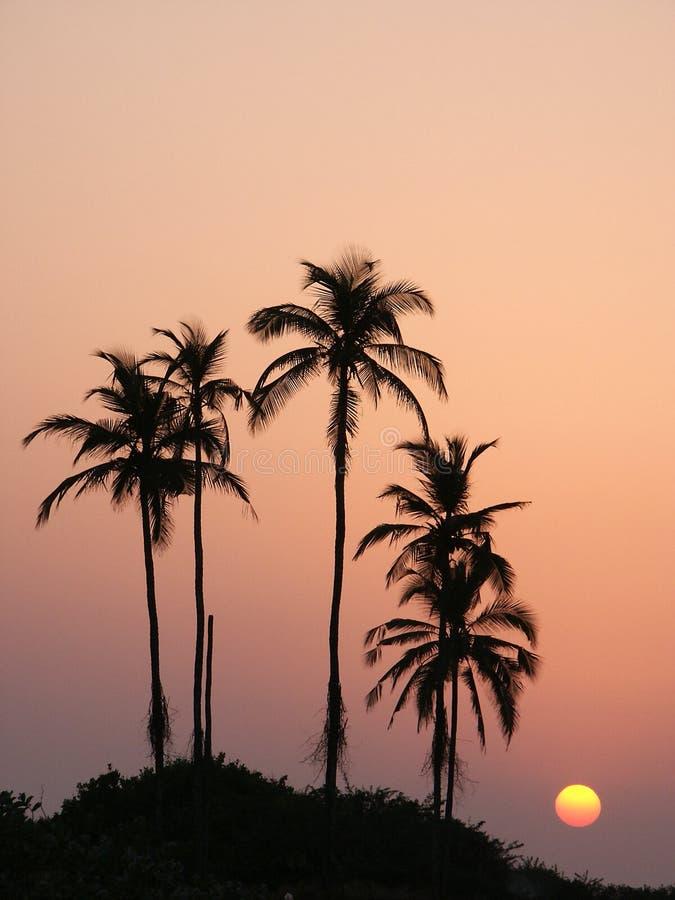 Free Sunset6 Royalty Free Stock Photography - 522577