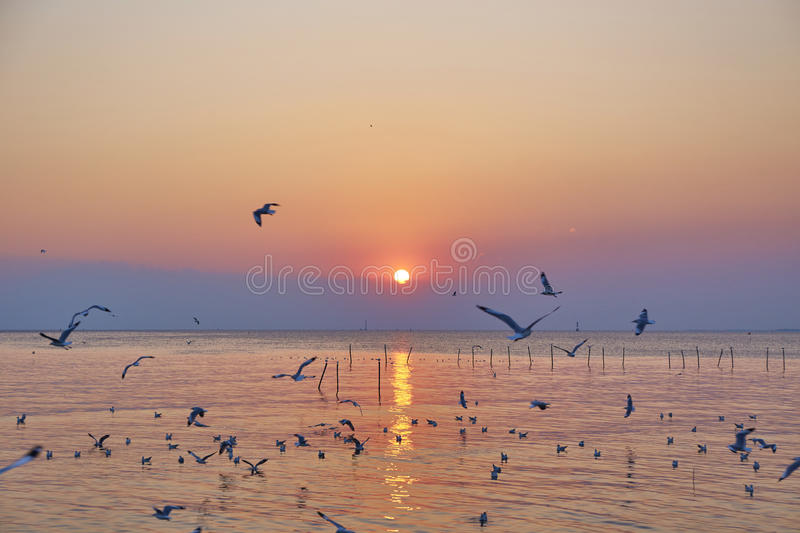Sunsets at the sea. Sunsets with silhouette seagull at the sea stock photography
