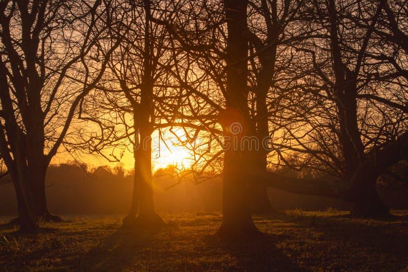 Sunsetting in the woods 免版税库存图片