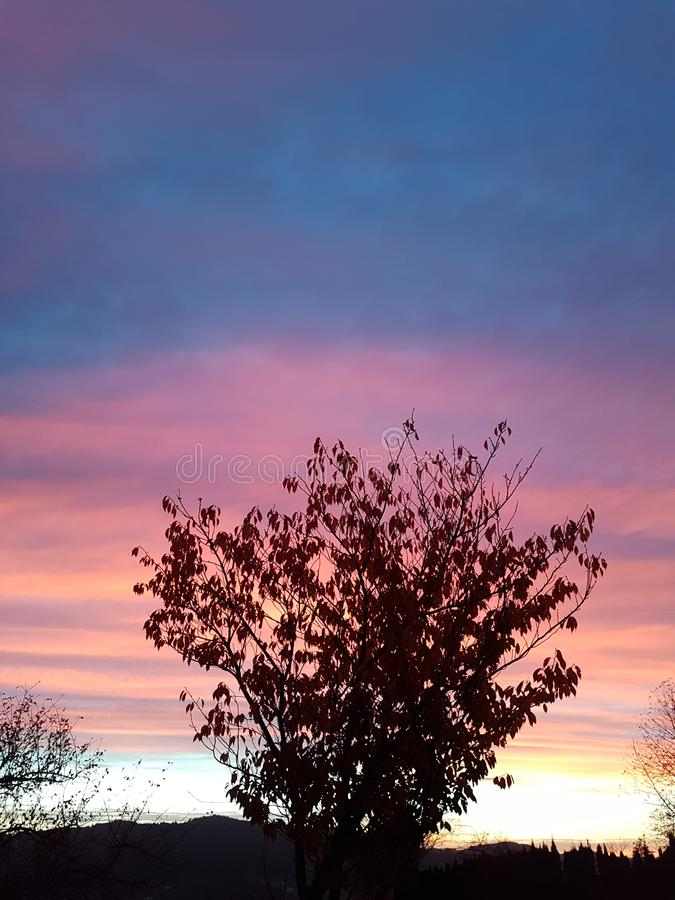 Sunsettree 免版税库存照片