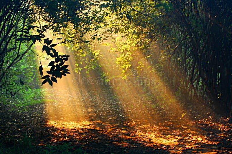 sunshine στοκ εικόνες με δικαίωμα ελεύθερης χρήσης