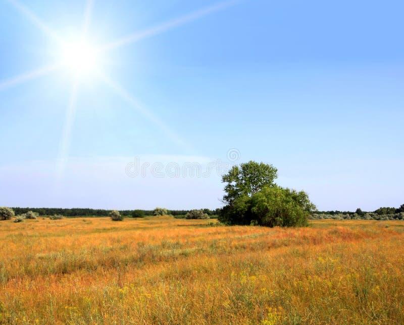 Download Sunshine stock photo. Image of tree, alone, restoration - 8004520