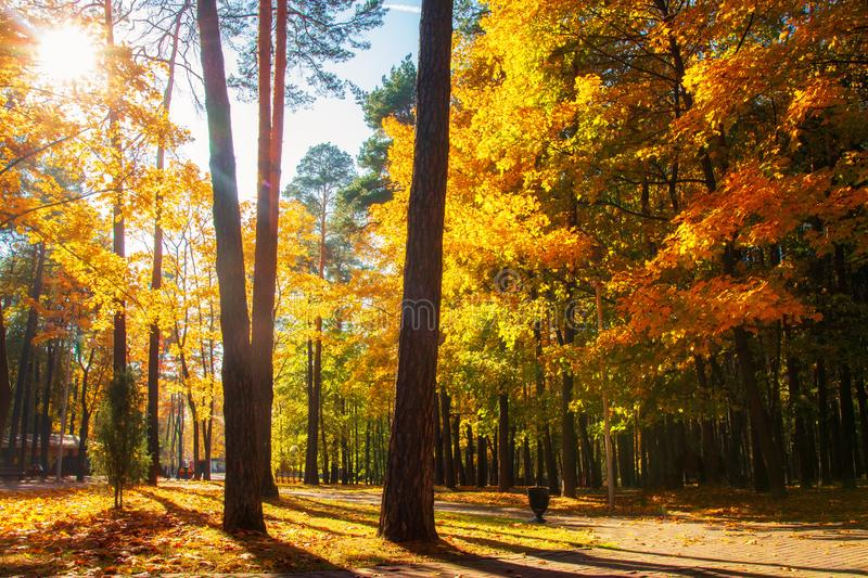 Sunshine in autumn park. Scenery autumn. Fall. Colorful trees in sunlight. Autumn scene. Fall nature landscape. Sun through trees. In park stock photos