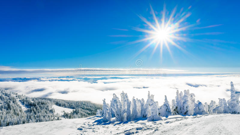 Sunshine, blue skies and snow covered trees royalty free stock photos