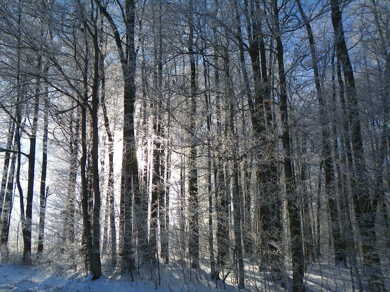 Sunshine creates icy shadows in a winter forest royalty free stock image