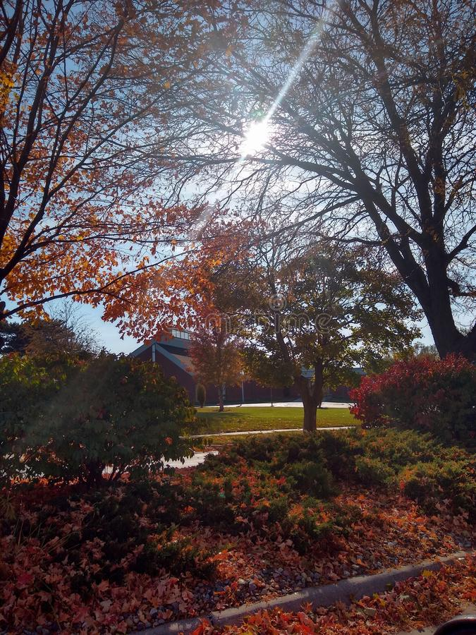 Sunshine Daydream stockbild