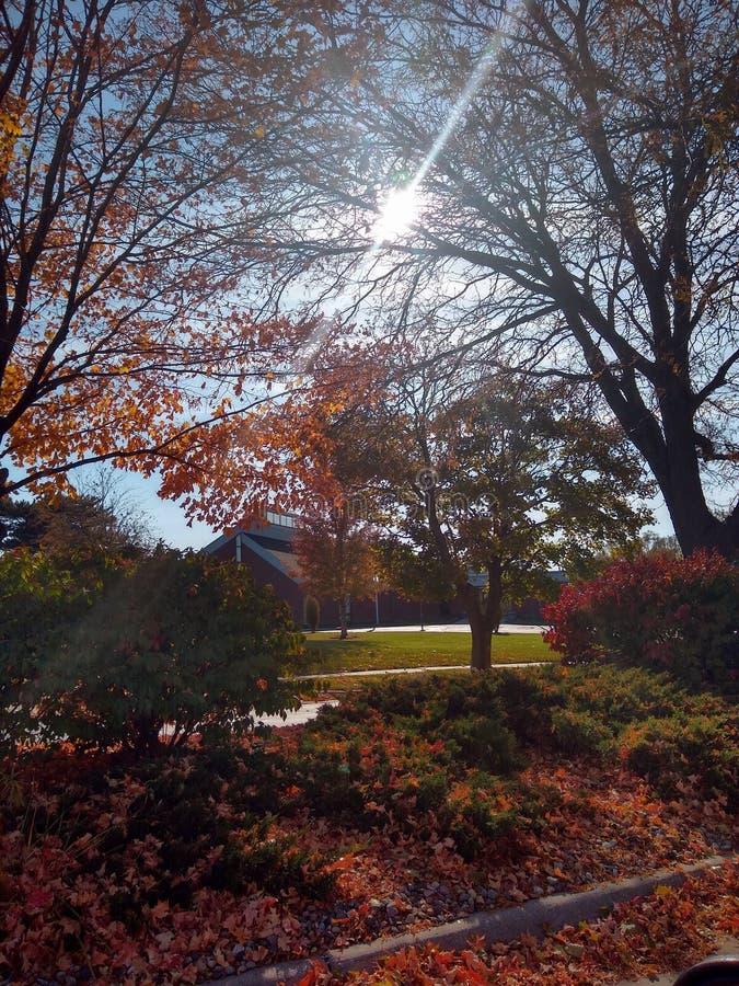Sunshine Daydream stock image