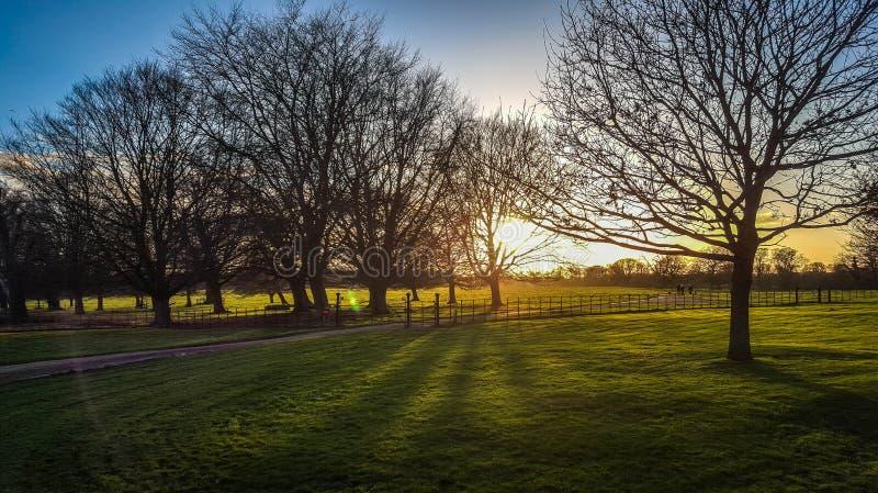 Sunshine in the evening at Felbrigg, Norfolk stock image