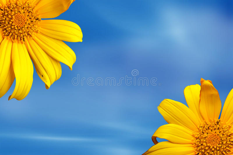 Sunshine flower. Yellow blooming sun flower in the blue sky stock photos