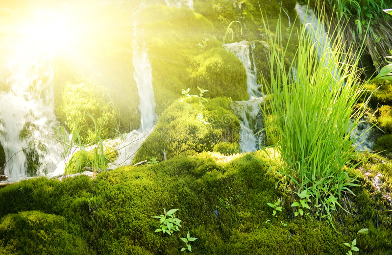 Download Sunshine in a forest stock photo. Image of beauty, beams - 5971502