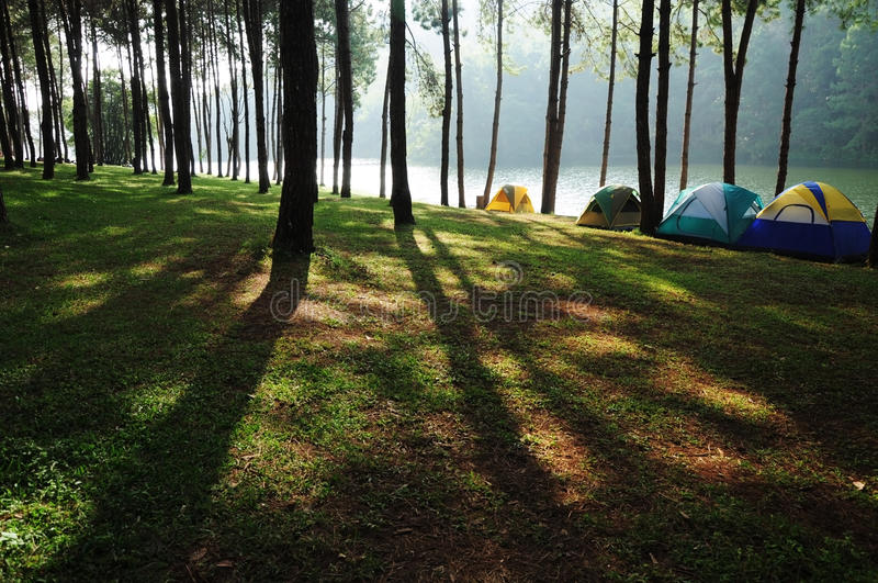 Download Sunshine In Forest By The River Royalty Free Stock Photo - Image: 23286905
