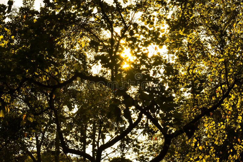 Sunshine Through Green Leafed Tree Free Public Domain Cc0 Image