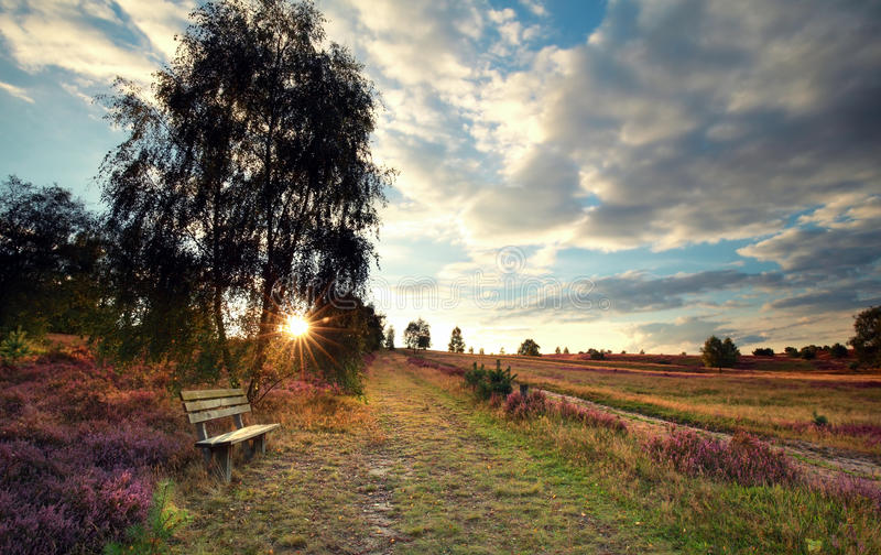 Sunshine over bench by birch tree stock images