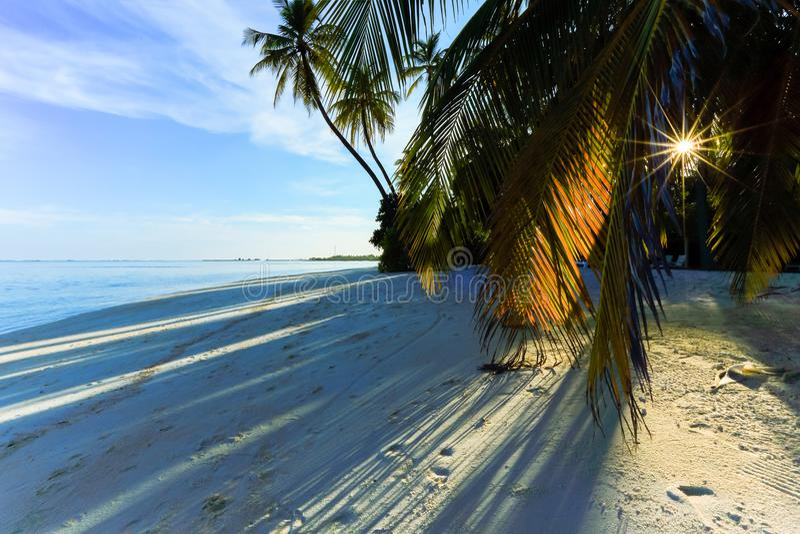 Sunshine through palm tree on beach royalty free stock photos