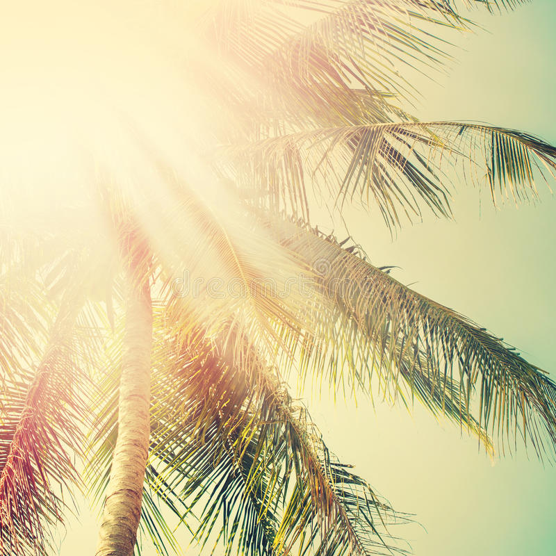 Sunshine in Palm Tree. Holiday Travel Adventure Concept. Vintage stock images