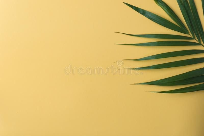 Sunshine on palm tree leaf.vacation summer.top view background.minimal background royalty free stock images