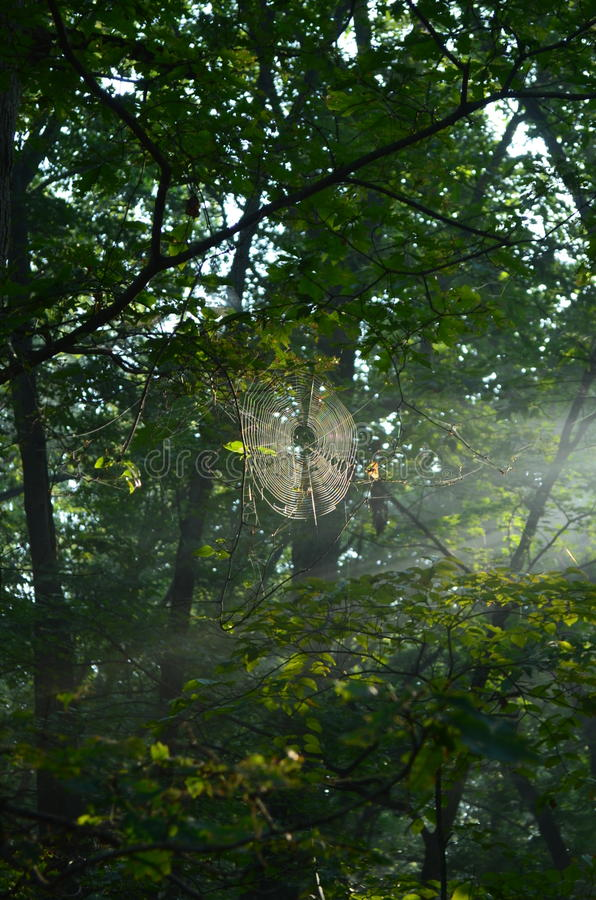 Sunshine in a spider web stock images