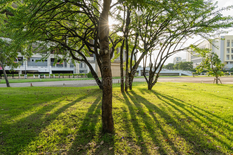 Sunshine. Sun shining through the trees royalty free stock image
