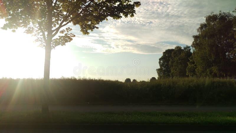 Sonnenschein stock images