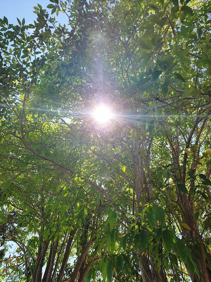 Sunshine Through The Tree stock photo