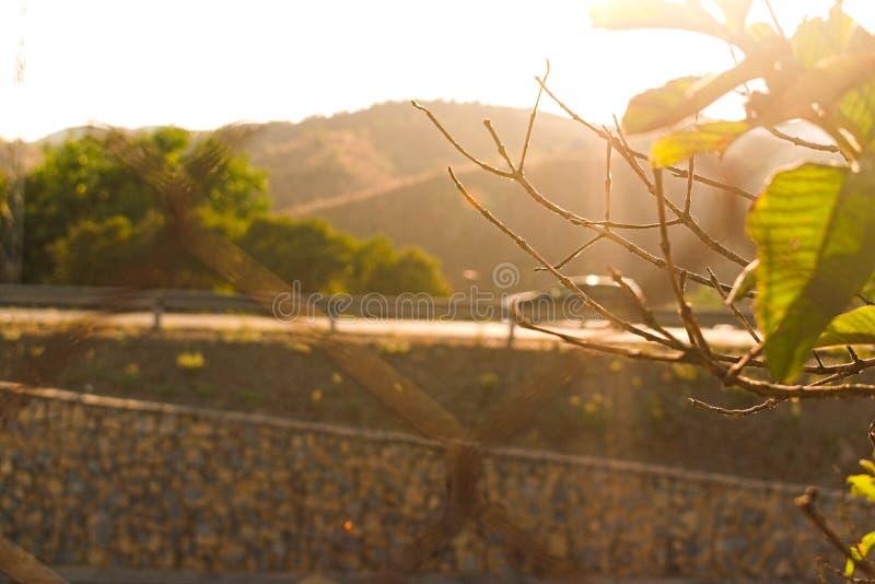 Sunshine tree of life hope royalty free stock photo