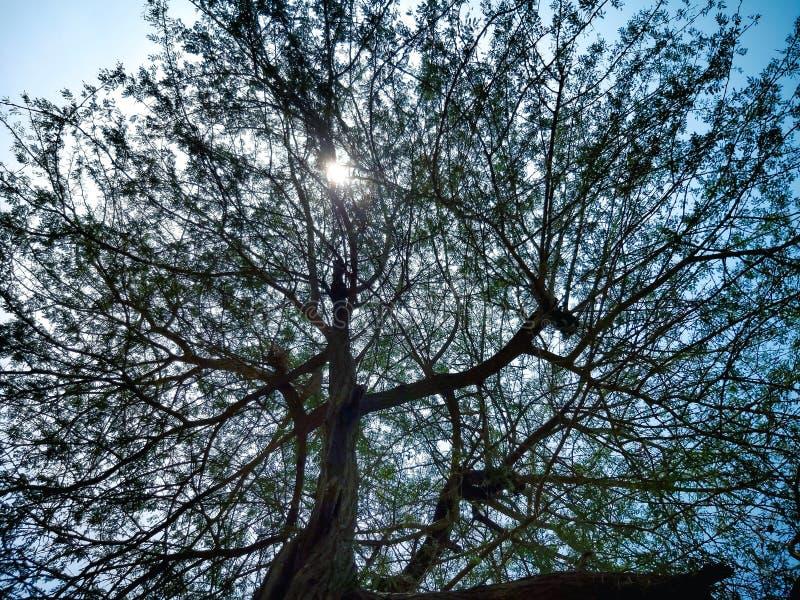 Sunshine Tree sunset show photography royalty free stock photo