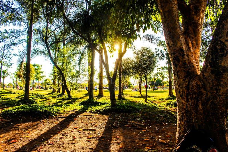 Sunshine Through Trees In Field Free Public Domain Cc0 Image