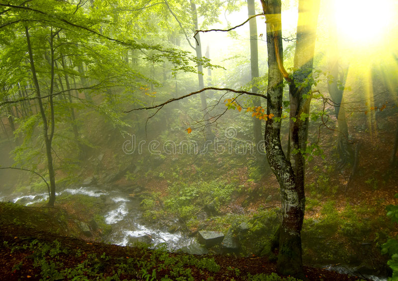 Download Sunshine in the  wood stock photo. Image of foliage, forest - 6172538