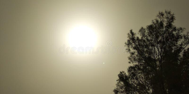 Sunshot klar enkel trädguling royaltyfri foto