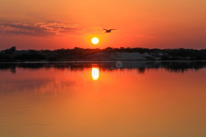 Sunsrise på Zambeziet River royaltyfri fotografi