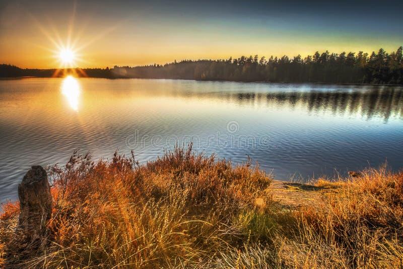Sunstar photos libres de droits