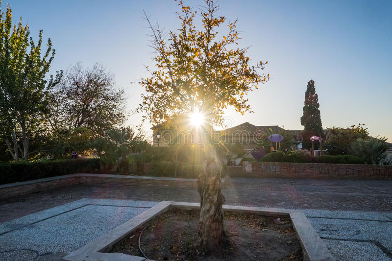 Sunstar par un arbre photo libre de droits