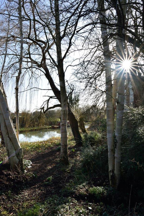 Sunstar przez drzew obraz royalty free