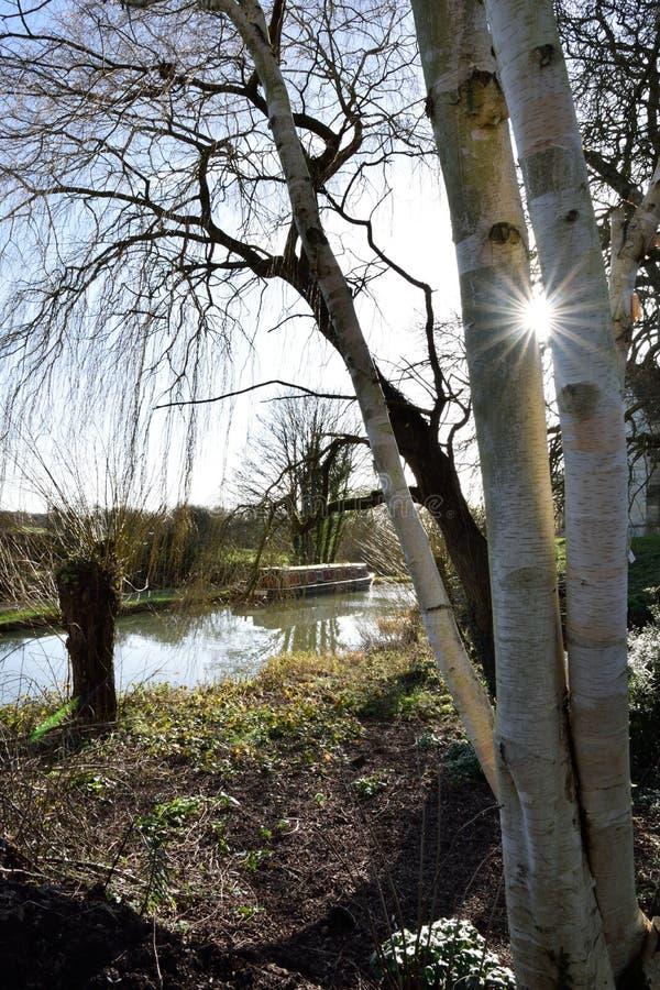 Sunstar through trees royalty free stock photos