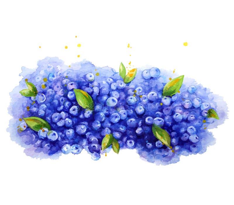 sunt organiskt för bakgrundsblåbärmat vattenfärg Målad hand royaltyfri illustrationer