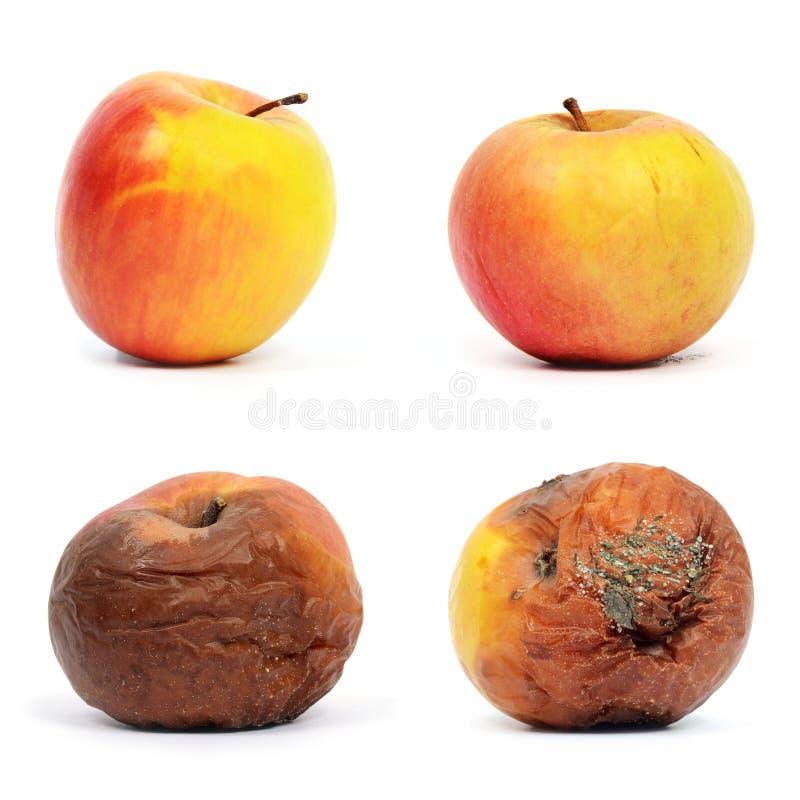sunt ruttet för äpplen royaltyfri fotografi