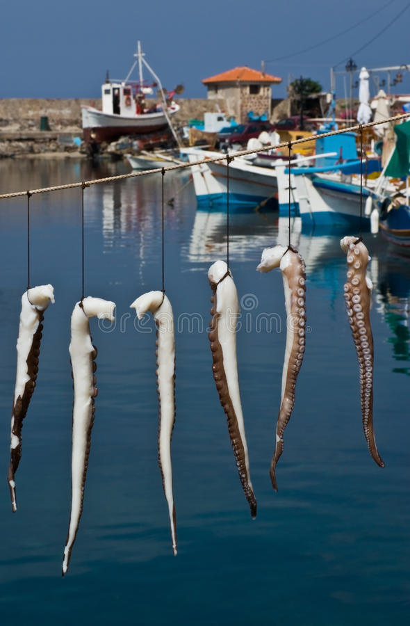 Download Suntanned octopus stock photo. Image of water, dinner - 15722270