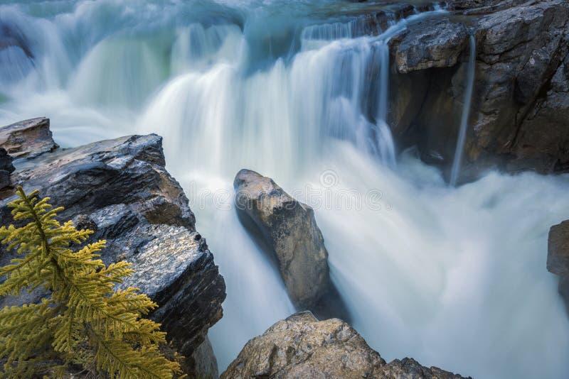 Sunwapta Falls en Jasper National Park photos stock